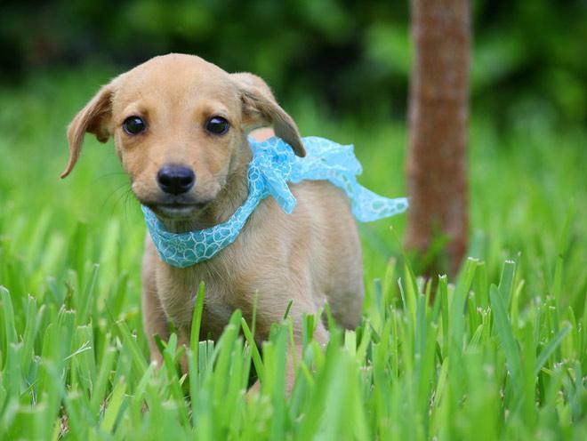 Atentie: Animale simpatice in 45 de poze! - Poza 43
