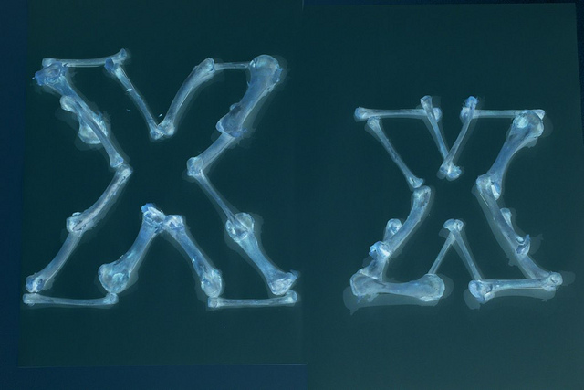 Creativitate maxima: Fotografii pentru alfabet - Poza 24