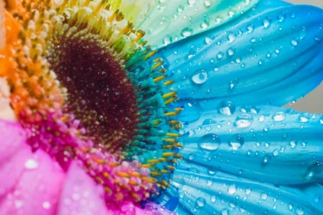 Poza 2: Super galerie: flori incredibile
