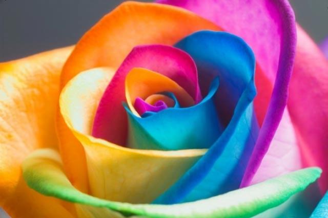 Poza 3: Super galerie: flori incredibile