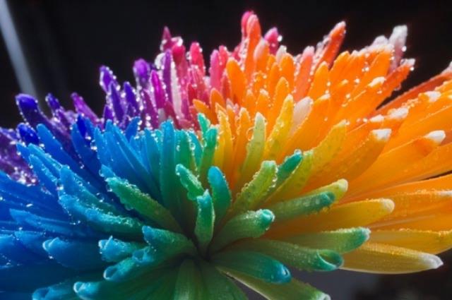 Poza 4: Super galerie: flori incredibile