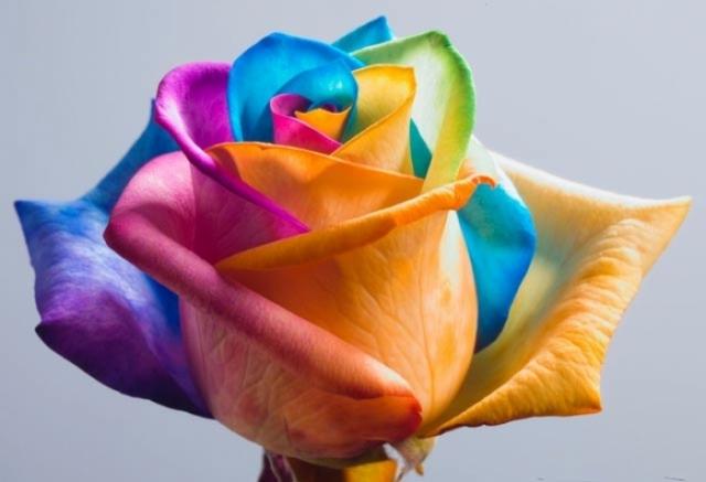Poza 6: Super galerie: flori incredibile