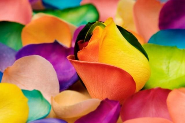 Poza 7: Super galerie: flori incredibile