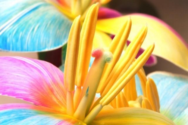 Poza 9: Super galerie: flori incredibile