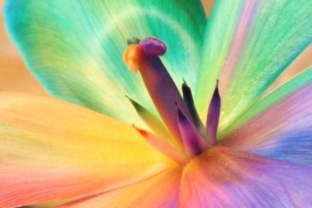 Poza 13: Super galerie: flori incredibile