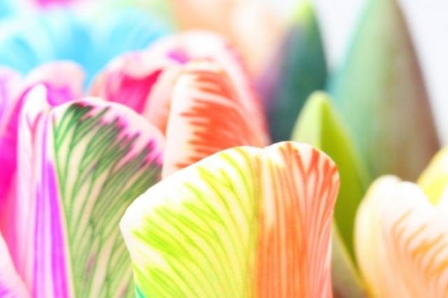 Poza 16: Super galerie: flori incredibile