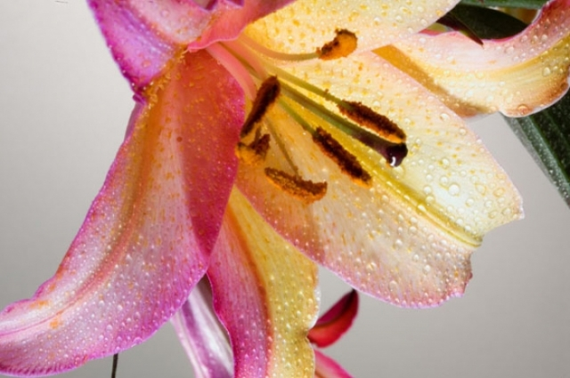 Poza 18: Super galerie: flori incredibile
