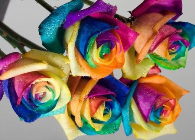 Poza 20: Super galerie: flori incredibile