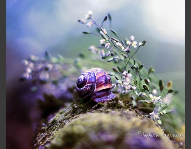 Foto 20: Magia lucrurilor mici: 25 de poze macro