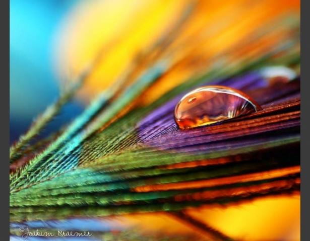 Foto 23: Magia lucrurilor mici: 25 de poze macro