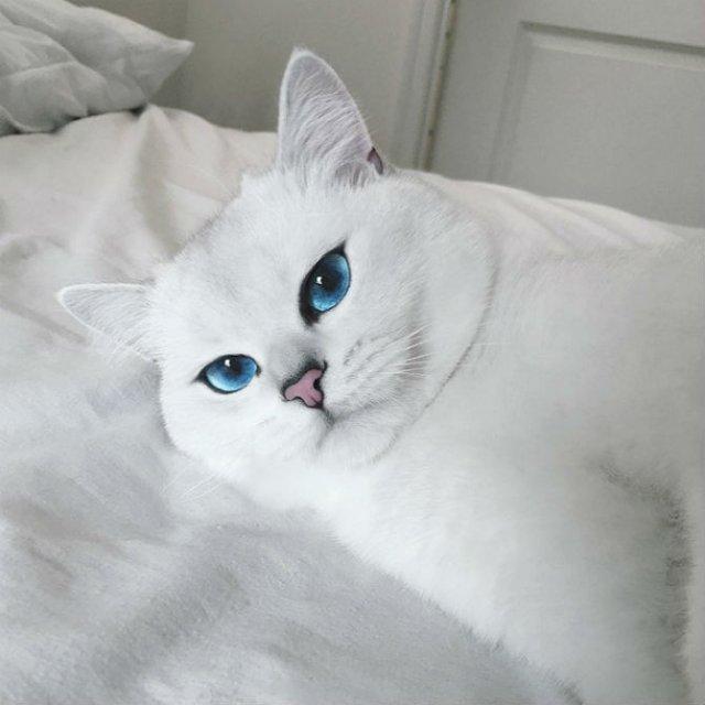 Pisicuta cu cei mai frumosi ochi din lume - Poza 11