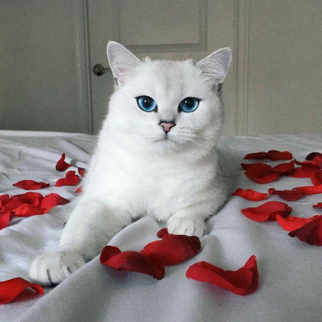 Pisicuta cu cei mai frumosi ochi din lume - Poza 12