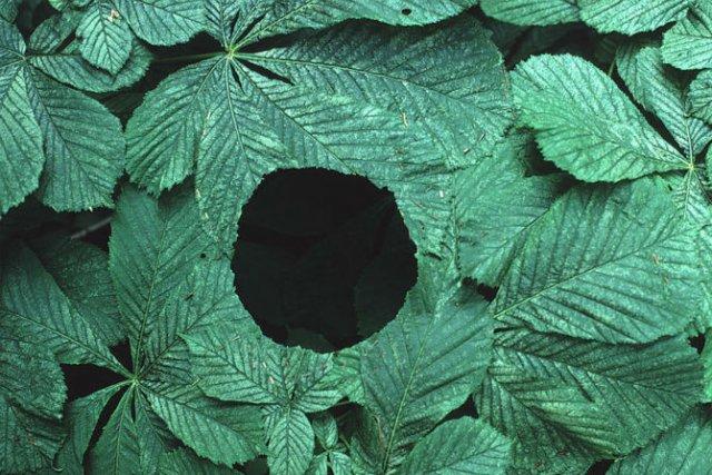 Ansambluri artistice cu resturi din natura - Poza 23