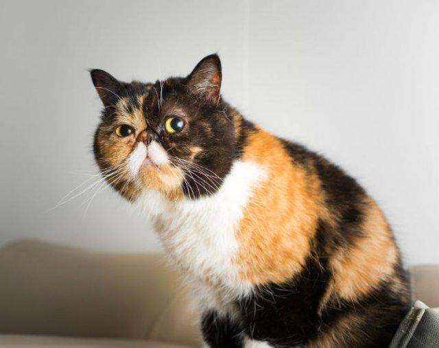 Expresiile pisicilor, in poze sugestive - Poza 13