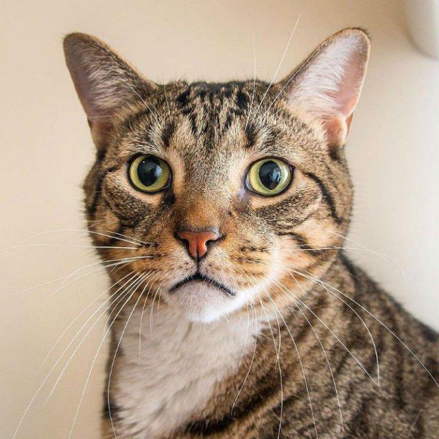 Expresiile pisicilor, in poze sugestive - Poza 15