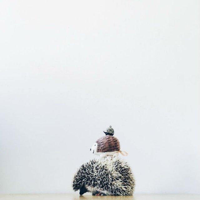 Viata simpla a unor arici haiosi, in poze nostime - Poza 11