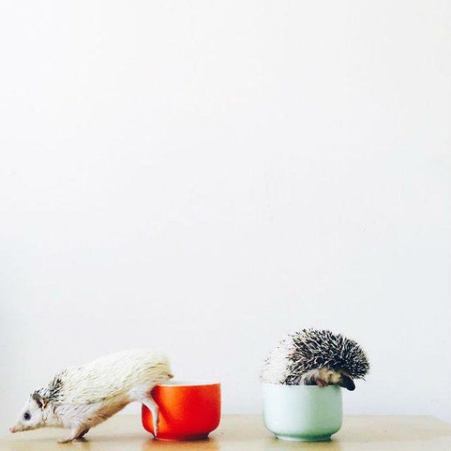 Viata simpla a unor arici haiosi, in poze nostime - Poza 15