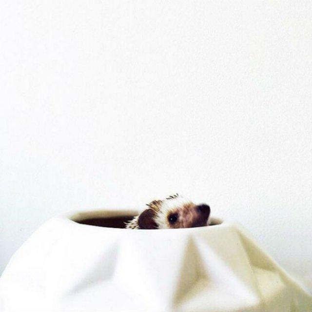Viata simpla a unor arici haiosi, in poze nostime - Poza 6