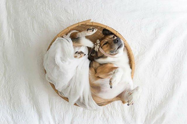 Adorabil! O altfel de sedinta foto cu un nou-nascut - Poza 6