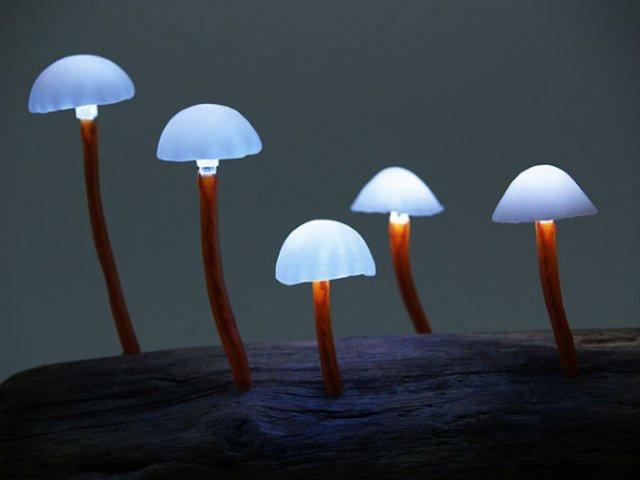 Ciuperci luminoase multicolore ce aduc magie in incaperi - Poza 1