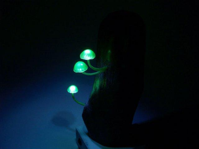 Ciuperci luminoase multicolore ce aduc magie in incaperi - Poza 5