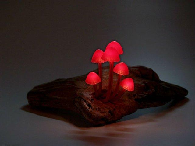 Ciuperci luminoase multicolore ce aduc magie in incaperi - Poza 6
