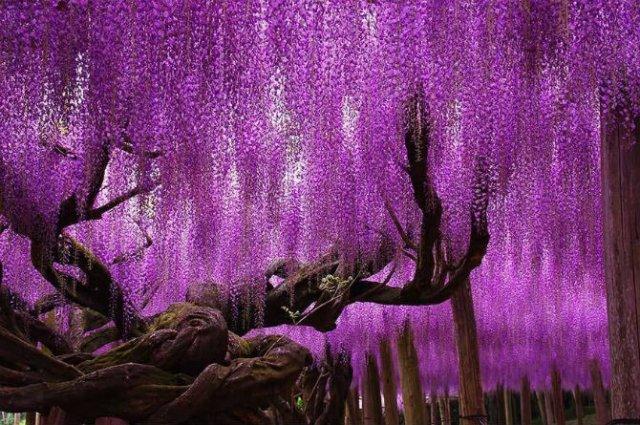Arborii mirifici ai lumii, in noua poze uluitoare
