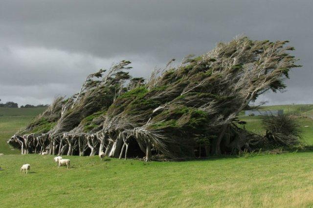 Arborii mirifici ai lumii, in noua poze uluitoare - Poza 2