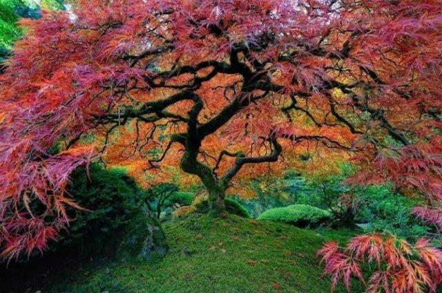 Arborii mirifici ai lumii, in noua poze uluitoare - Poza 3