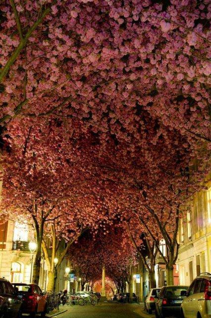 Arborii mirifici ai lumii, in noua poze uluitoare - Poza 4