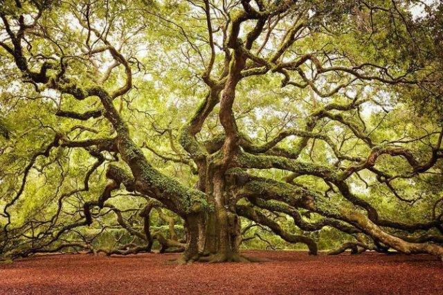 Arborii mirifici ai lumii, in noua poze uluitoare - Poza 5