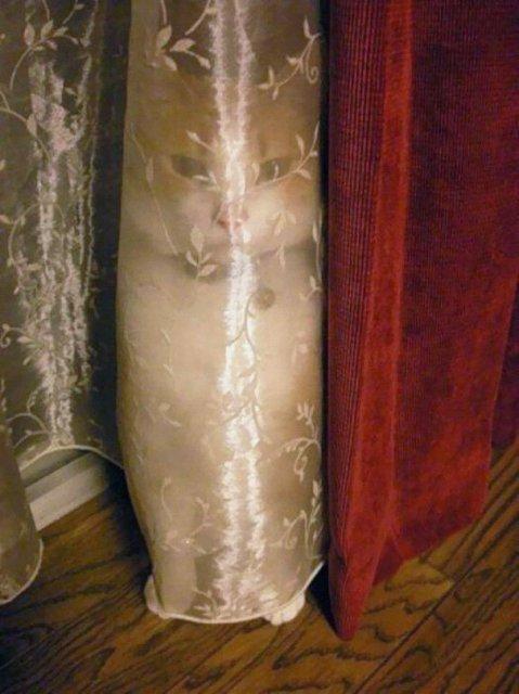 13 Maestri ai camuflajului, prinsi in fapt