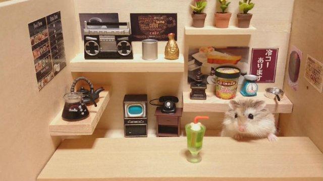 Lumea miniaturala a hamsterilor, in poze haioase - Poza 1
