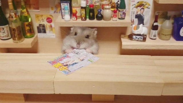 Lumea miniaturala a hamsterilor, in poze haioase - Poza 10