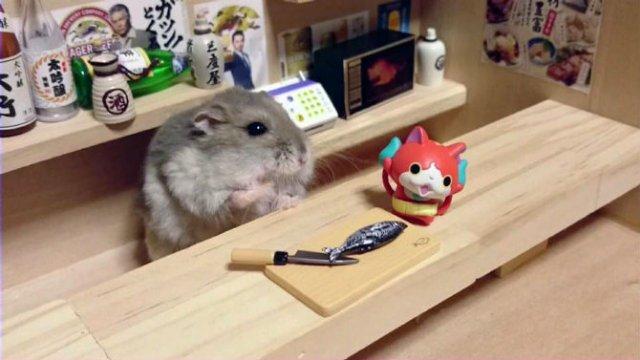 Lumea miniaturala a hamsterilor, in poze haioase - Poza 11