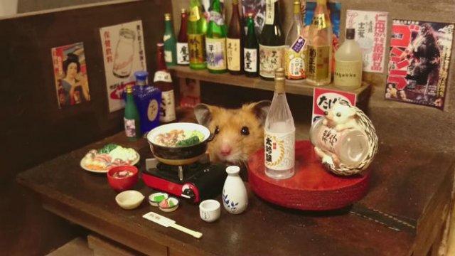 Lumea miniaturala a hamsterilor, in poze haioase - Poza 2