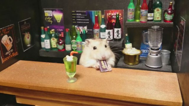 Lumea miniaturala a hamsterilor, in poze haioase - Poza 3