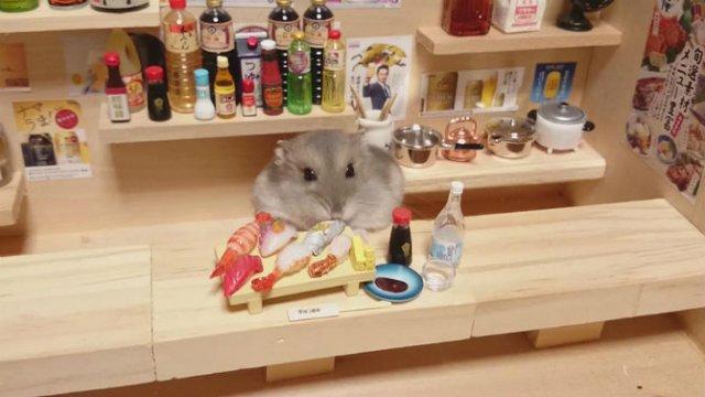 Lumea miniaturala a hamsterilor, in poze haioase - Poza 4