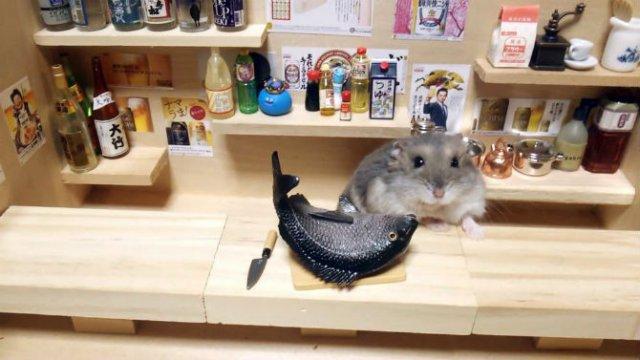 Lumea miniaturala a hamsterilor, in poze haioase - Poza 5