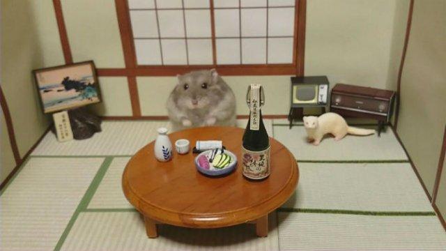 Lumea miniaturala a hamsterilor, in poze haioase - Poza 6