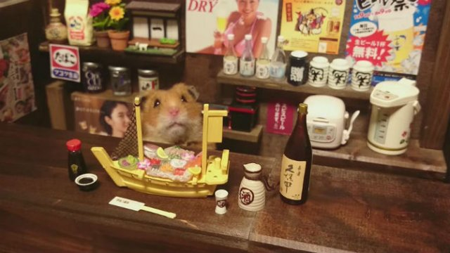 Lumea miniaturala a hamsterilor, in poze haioase - Poza 7