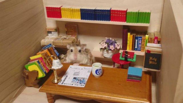 Lumea miniaturala a hamsterilor, in poze haioase - Poza 8
