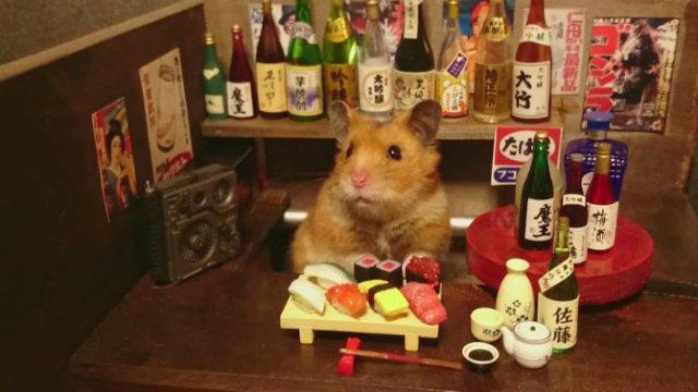 Lumea miniaturala a hamsterilor, in poze haioase - Poza 9
