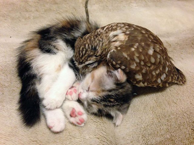 Prietenie neobisnuita: un pui de pisica si unul de bufnita devin de ne - Poza 1