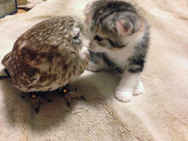 Prietenie neobisnuita: un pui de pisica si unul de bufnita devin de ne - Poza 5