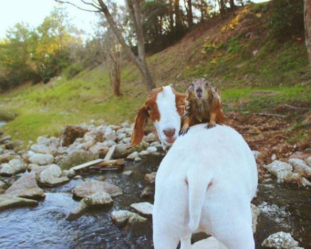 Doua rozatoare simpatice, intr-un pictorial haios - Poza 16