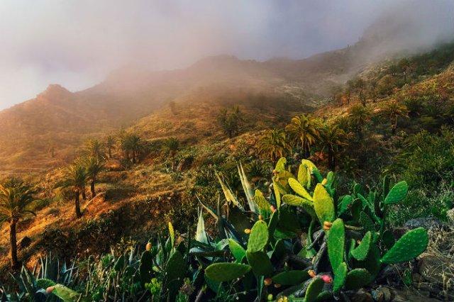 O escapada superba in Insulele Canare - Poza 4