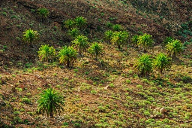 O escapada superba in Insulele Canare - Poza 7