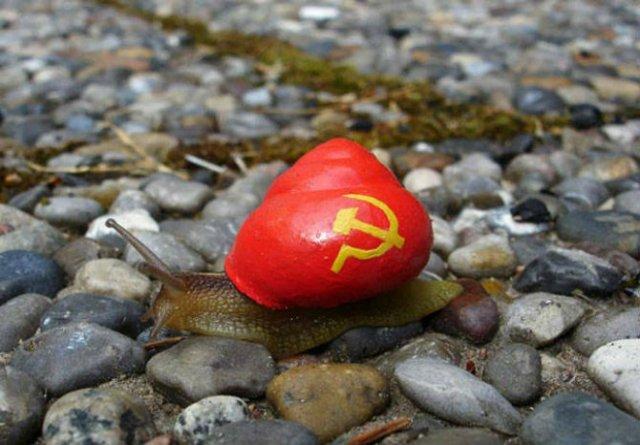 Cei mai colorati melci din lume - Poza 1