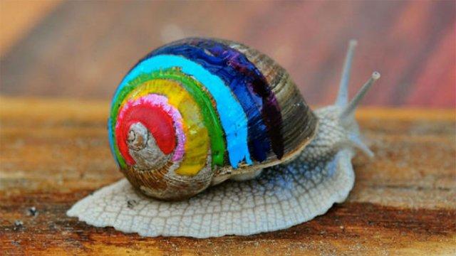 Cei mai colorati melci din lume - Poza 10